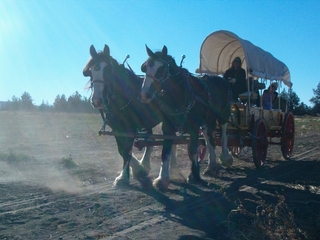 Covered Wagon Rides