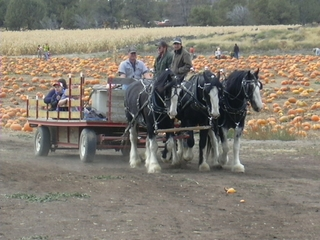 People mover for hayrides
